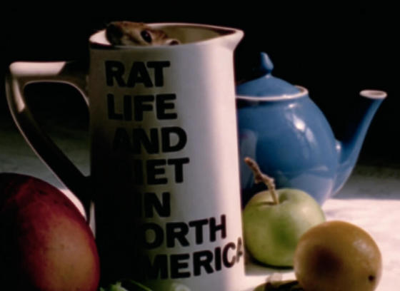 Rat Life and Diet in North America