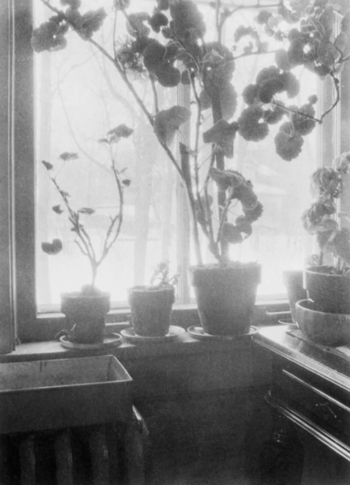 Art Canada Institute, Lionel LeMoine Fitzgerald, Geraniums on a window sill, photograph, 1943